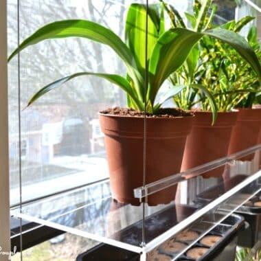 plants-on-beautiful-views-window-unit