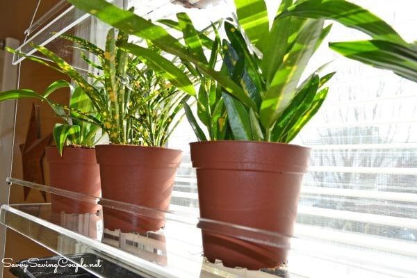 plants-on-window-unit