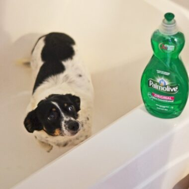 dog-about-to-get-washed