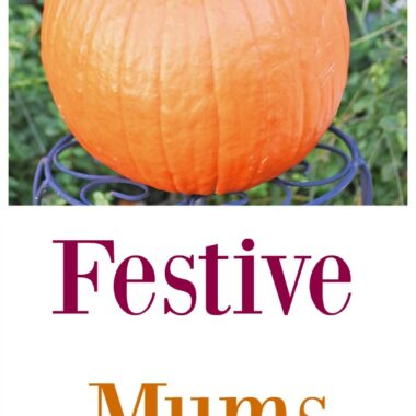 Festive-mums-pumpkin-planter