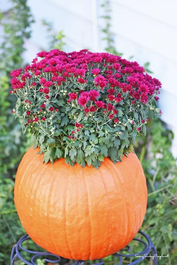 Pumpkin-Mums-planter