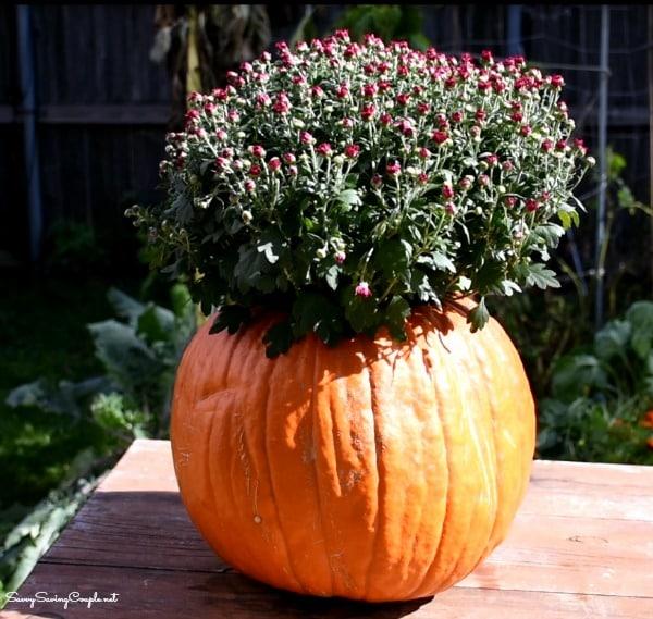 mums-in-pumpkin
