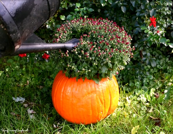 mums-pumpkin-planter-diy