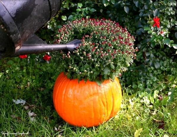 mums-pumpkin-planter-diy