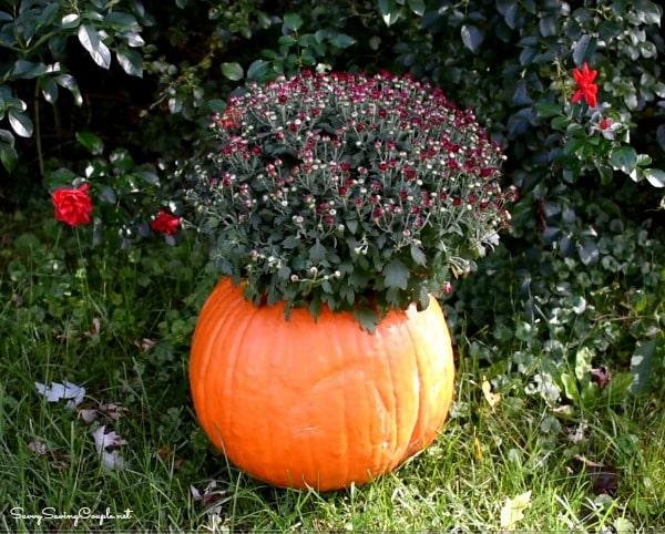 pumpkin-planter-with-mums