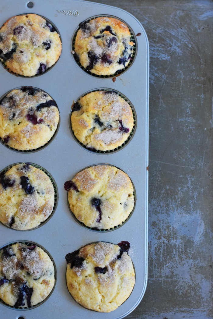 Blueberry muffins in muffin tin on silver background