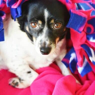 No Sew Dog Fleece Blanket