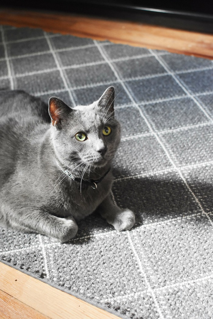 Cat on grey rug 1