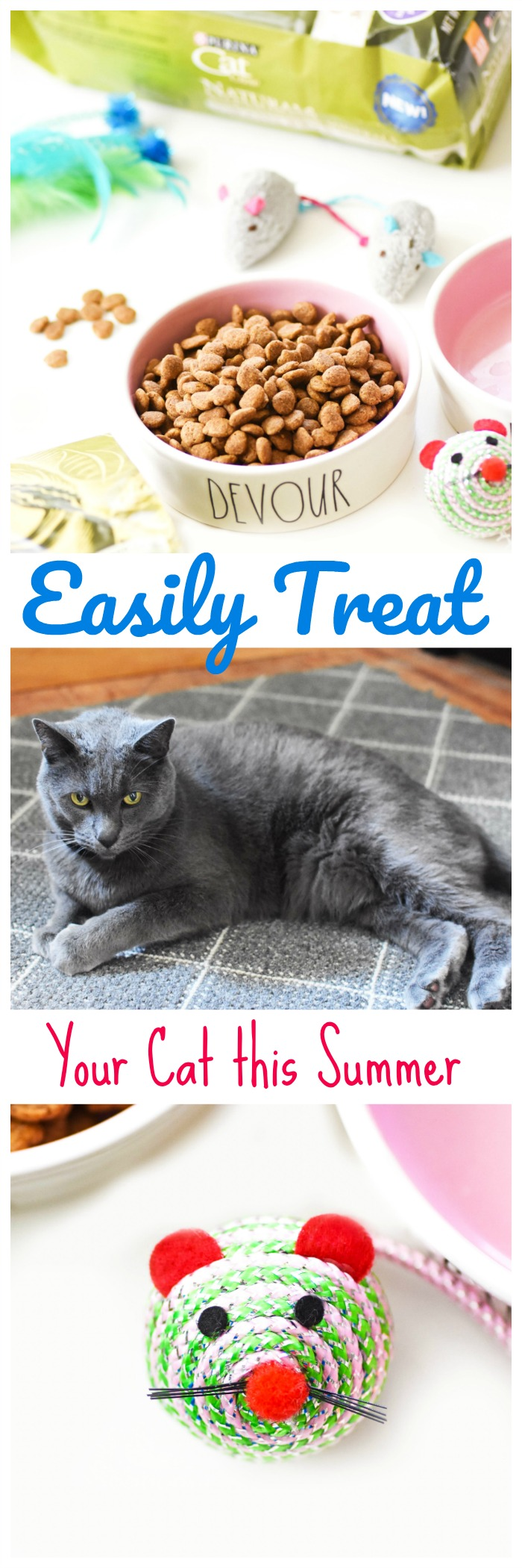 How to Easily Treat Your Cat this Summer