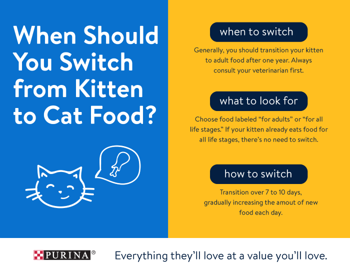 when to feed kittens 1