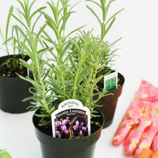 Herb potted plants 1